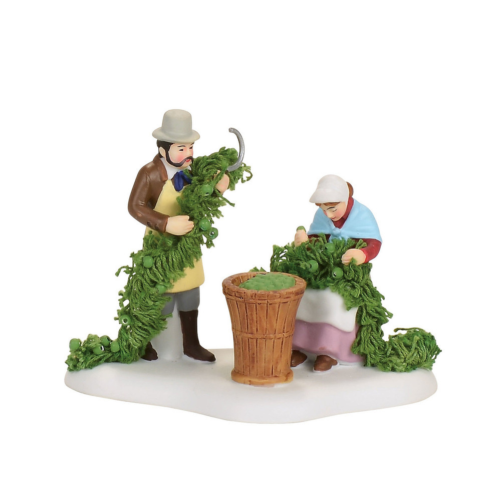 Oast House Hop Harvest