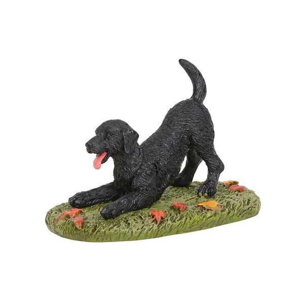 Playful Black Lab
