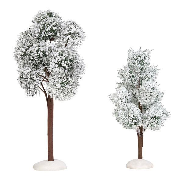 Snowy Jack Pine Trees