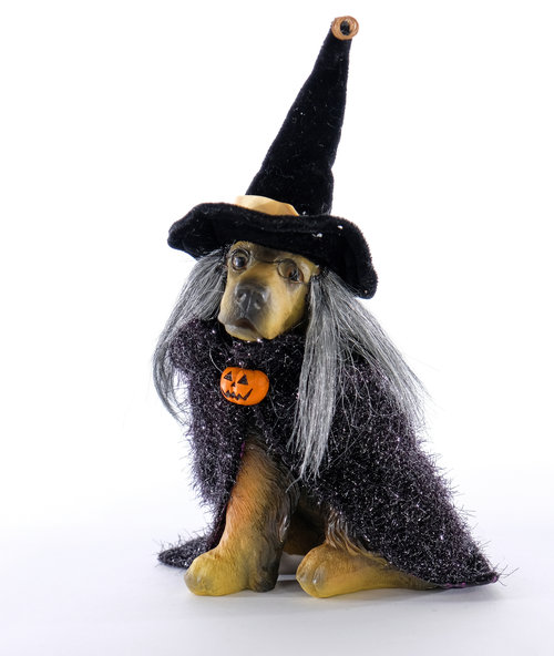 Spooky the Witch Dog
